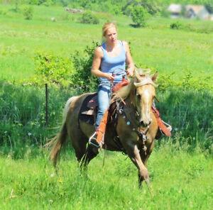 2006 registered AQHA mare-well broke