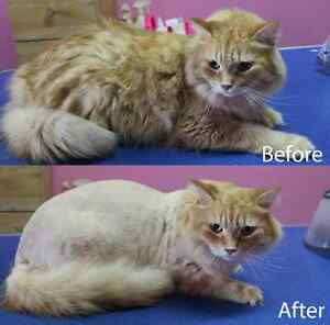 CAT GROOMING available London Ontario image 1