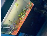 Lovely large Fluval fish tank 190 litres ,cleaned &Empty.