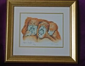 Stephan Gayford limited edition print o framed in gold frame.