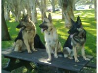 ARE YOUR PETS THIS WELL BEHAVED? DOG OBEDIENCE TRAINING & DOG WALKING