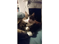 Cat Sitter - Islington area