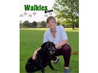 Professional Dog Walking Service (Horfield, Fishponds Clifton Areas). Dog Walker Pet/House Sitter