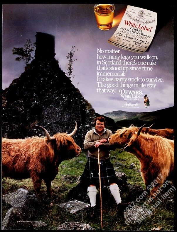 1988 highland cattle bull photo Dewar