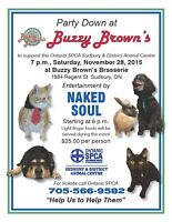 horses, pigs and cats and dogs-help us help them Sudbury SPCA