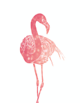 The Pink Flamingo's Boutique