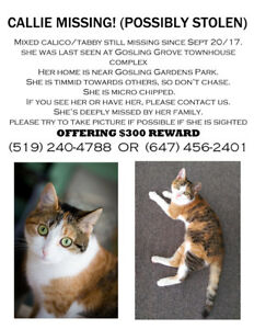 Callie still missing 10 months now! (possibly stolen)