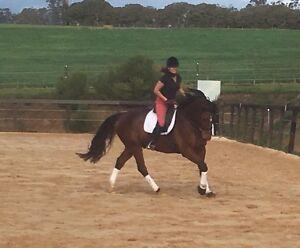 Rebecca Scott equestrian Hastings Mornington Peninsula Preview