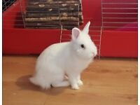6 months old white rabbit