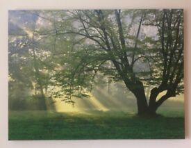 Next Canvas Print. Sun rays through trees, 77cm X 57cm, collect Stafford or Stone