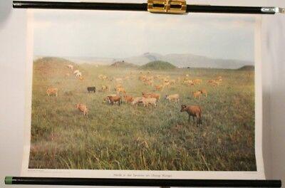Schulwandkarte Role Map Wall Chart Africa Herd in Savannah Am Ubangi Congo