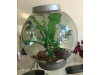 Biorb fish tank 15L