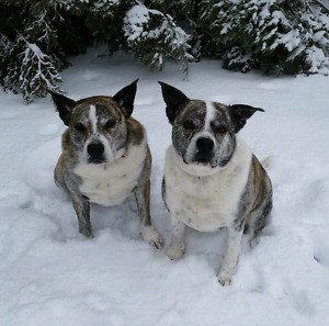 2 dogs lost in Pleasant Point area