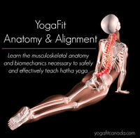 Learn the Fundmentals of Yoga Anatomy & Alignment