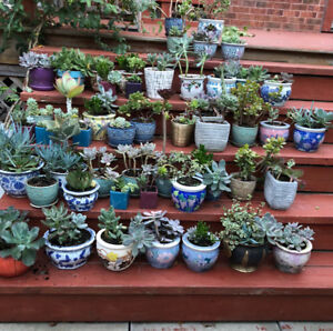 Cactus for Sale,about 50% off from $5~$15