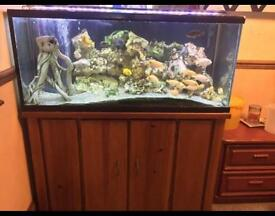 *UPDATED*Fish tank set up