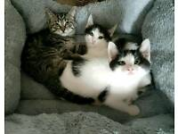 Beautiful kittens ready for new homes