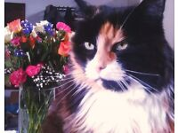 Loving home needed for beautiful, older cat