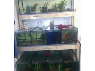 Aquarium rack display fish tank breeding setup not john allen