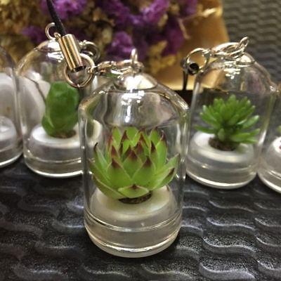 Real Live Succulent Plant Cactus Wearable Necklace Chain Keyring Pendant