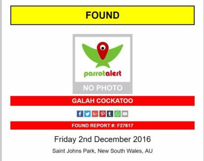 Wanted: FOUND GALAH