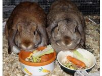 Lola & Herbie are looking for a forever home together