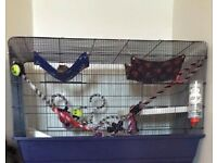 3 young playful male rat rats with large cage and accessories