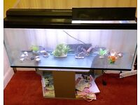 Fish Tank Aquarium 300 Litre 4ft with pump lights and tropical theme items: