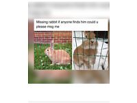 Missing rabbit