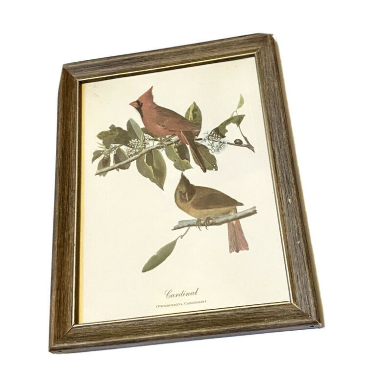 Vintage Cardinal Framed Art Print. Richmoneda Cardinalis. Wall Hanging Decor