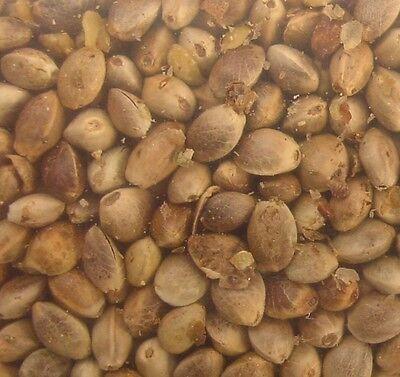 Morning Bird Hemp Seed for Birds (20 lb)