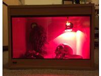 Reptile vivarium encloser tank