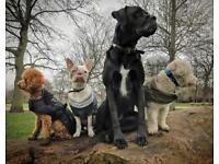 Doggy Daycare / Walking