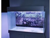 Now sold - Red Sea Max 250 fish tank for sale