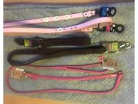 Brand New Dog leads and collars