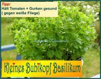 ♥ Kleines Bubikopf Basilikum,Samen,Kräuter,Tomaten Balkon Garten Eimsbüttel - Hamburg Schnelsen Vorschau