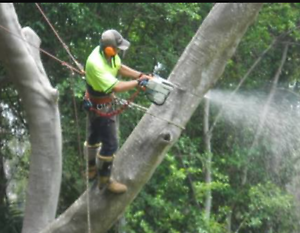 Ridgepro Tree service Mona Vale Pittwater Area Preview