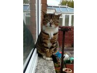 Possible missing cat - Llanrumney