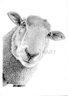 SHEEP ART PRINT -Pencil Drawing Wildlife Animal Sketch A4 Wall Art Artist Signed