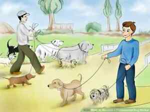 Dog walker & or Dog minding. Para Hills Salisbury Area Preview