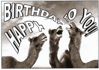 Ansichtskarte:Happy Birthday to you - drei singende Kamele three singing camels