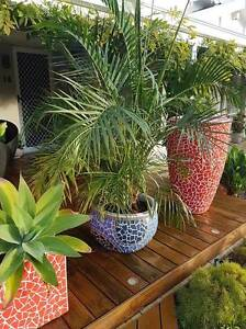 Pots with plants - On Sale Saturday 27th May from 9am to 12 noon Ballajura Swan Area Preview