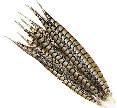 2 Pcs LADY AMHERST PHEASANT Feathers 20-30