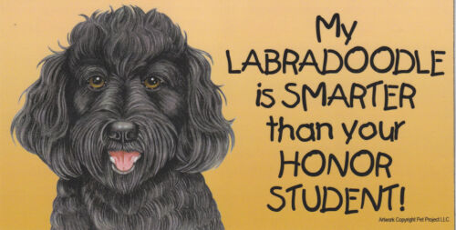 My LABRADOODLE (black) is SMARTER than your HONOR STUDENT car/fridge MAGNET 4X8