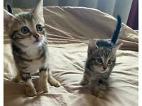 Kittens ready for there for ever homes