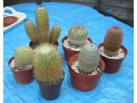 Cactus plants - cacti collection