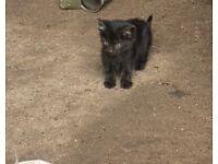 4 kittens for sale Annalong Co Down