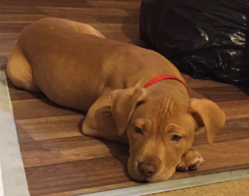 10 week old puppy