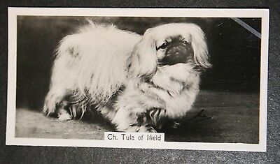 Pekingese  Show Champion  1930's Vintage Photo Card  # VGC