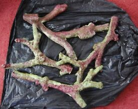 marine live rock , tonga branch approx 5kg nice pieces - ( collection only )